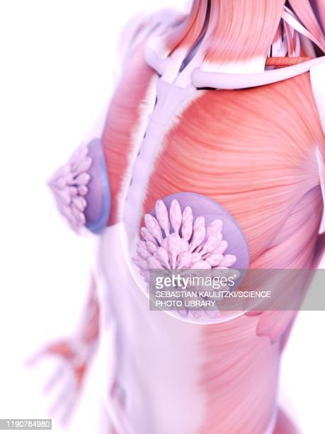 ilustraciones, imágenes clip art, dibujos animados e iconos de stock de breast implants, illustration - aumento de senos