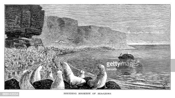 Breeding Rookery of Sea Lions