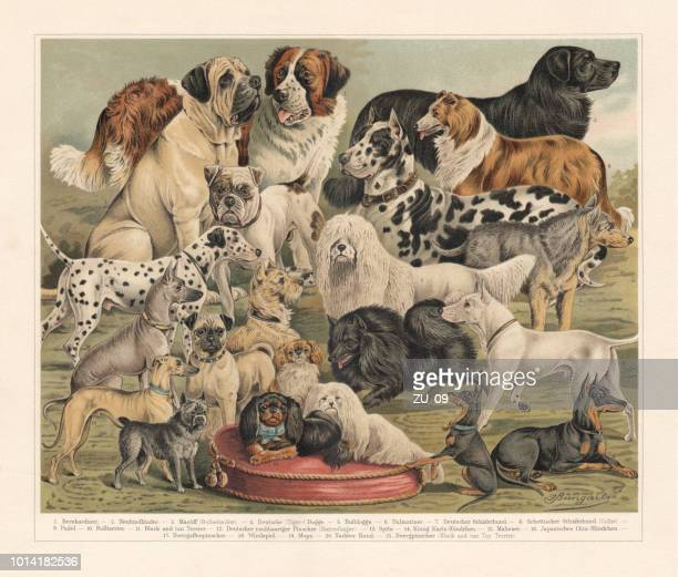 Breeds of dogs, chromolithograph, published in 1897