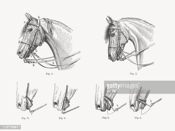 Bridle, presentation of the effect, wood engravings, published in 1897