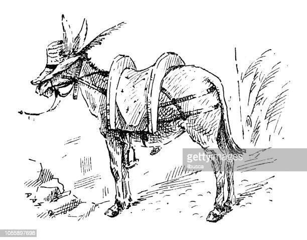 british london satire caricatures comics cartoon illustrations: donkey with hat - donkey stock illustrations, clip art, cartoons, & icons