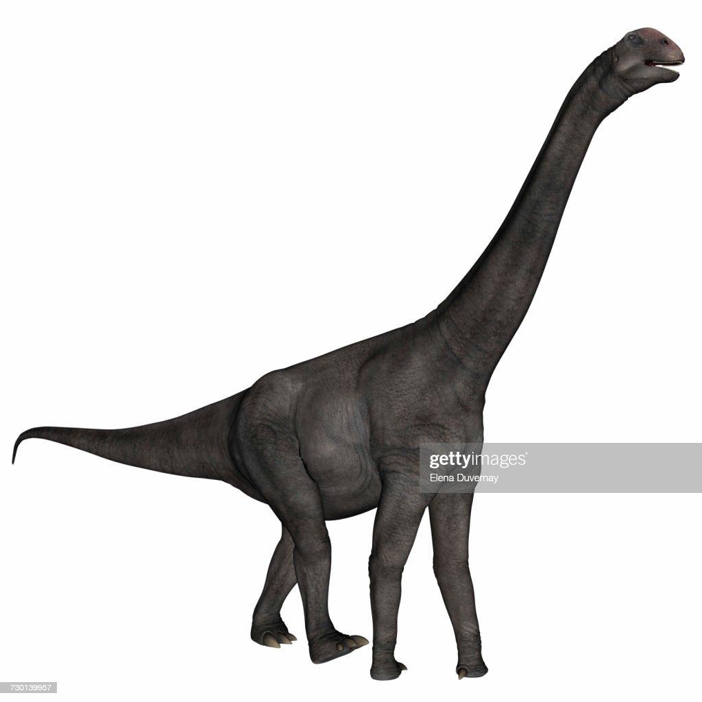 Brontomerus dinosaur walking, white background. : stock illustration