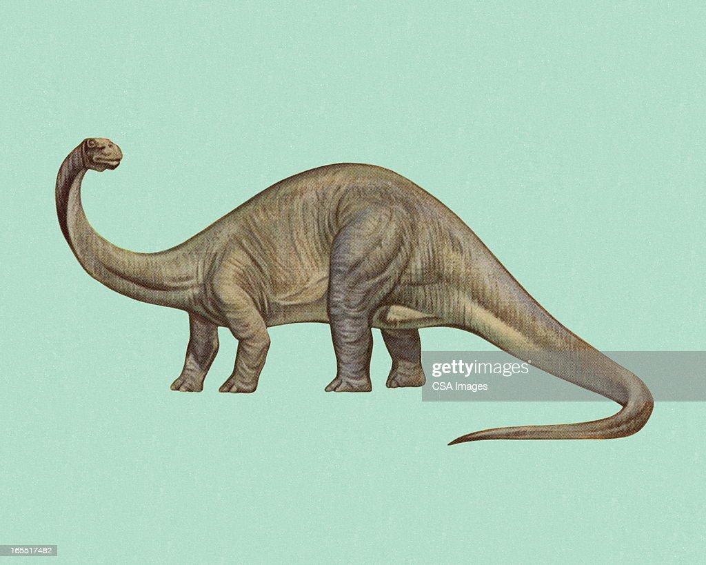 Brontosaurus : stock illustration