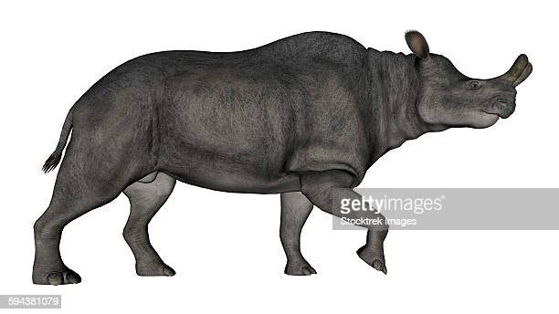 Brontotherium isolated on white background.