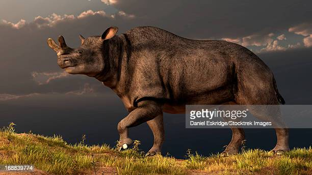 ilustraciones, imágenes clip art, dibujos animados e iconos de stock de a brontotherium walking atop a grassy hill. - paleozoología