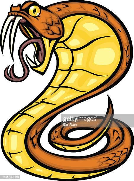 ilustraciones, imágenes clip art, dibujos animados e iconos de stock de marrón cobra - cobra