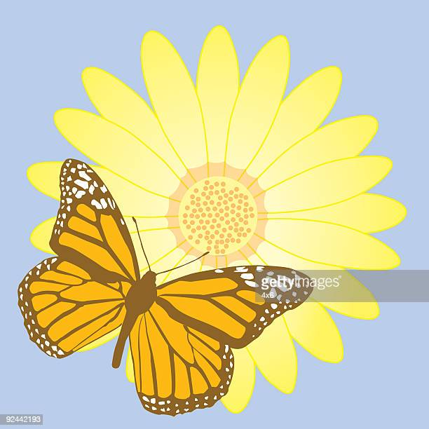 brown & orange butterfly on flower - vector - knockout stock illustrations, clip art, cartoons, & icons
