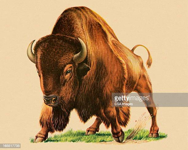 buffalo - brown background stock illustrations