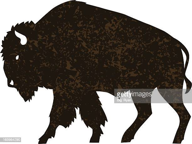 buffalo - african buffalo stock illustrations, clip art, cartoons, & icons