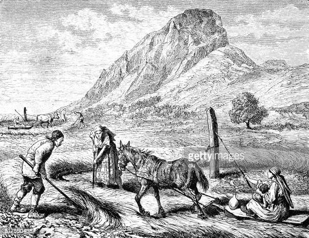bulgarian threshing sleigh, pulled by a horse - 1877 stock illustrations, clip art, cartoons, & icons