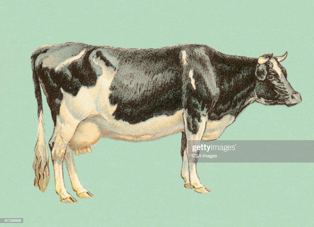 Bull : Ilustración de stock