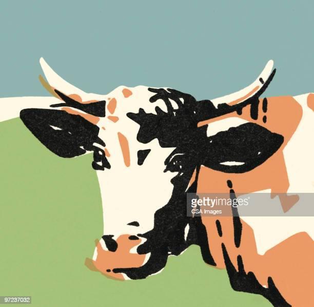 bull - bull animal stock illustrations