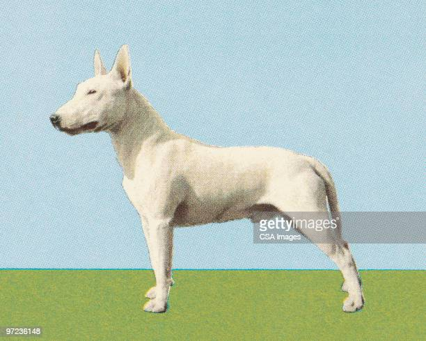 ilustraciones, imágenes clip art, dibujos animados e iconos de stock de bull terrier - gradas