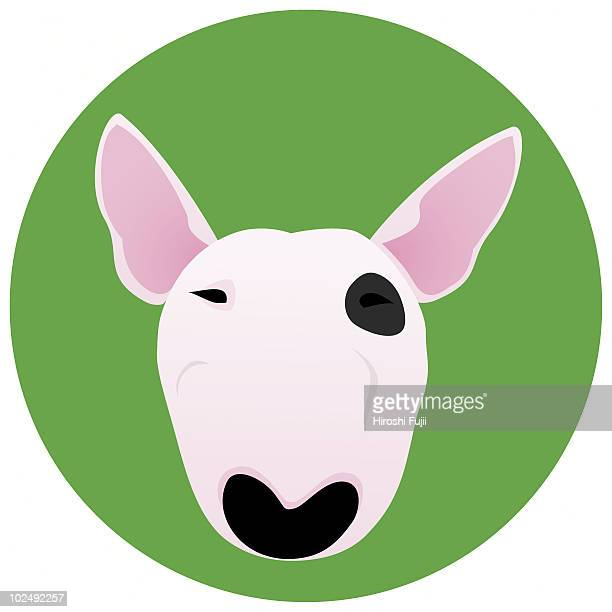 A Bull Terrier on a green circular background