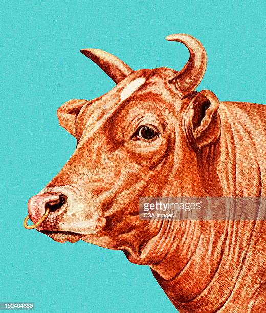 bull with nose ring - cow stock illustrations