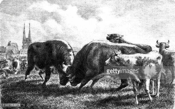 bullfighting at the first pasture exit - paddock stock illustrations, clip art, cartoons, & icons