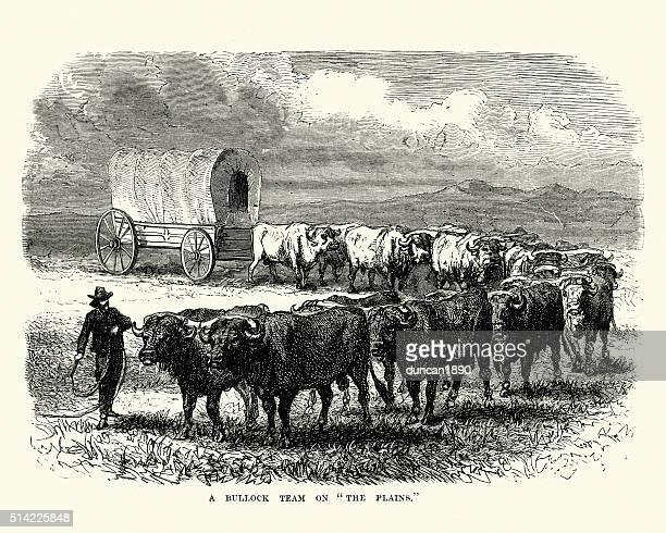 bullock team pulling a covered wagon, 19th century - savannah stock illustrations, clip art, cartoons, & icons