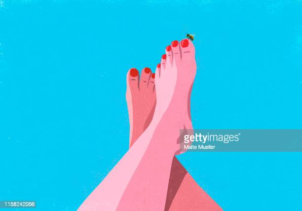 bumble bee landing on big toe of sunburned woman - human body part stock illustrations