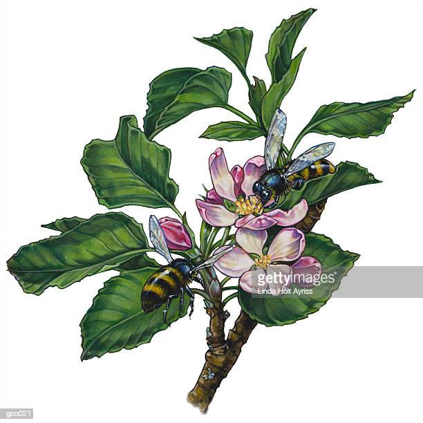 bumblebees & apple blossoms - bumblebee stock illustrations, clip art, cartoons, & icons