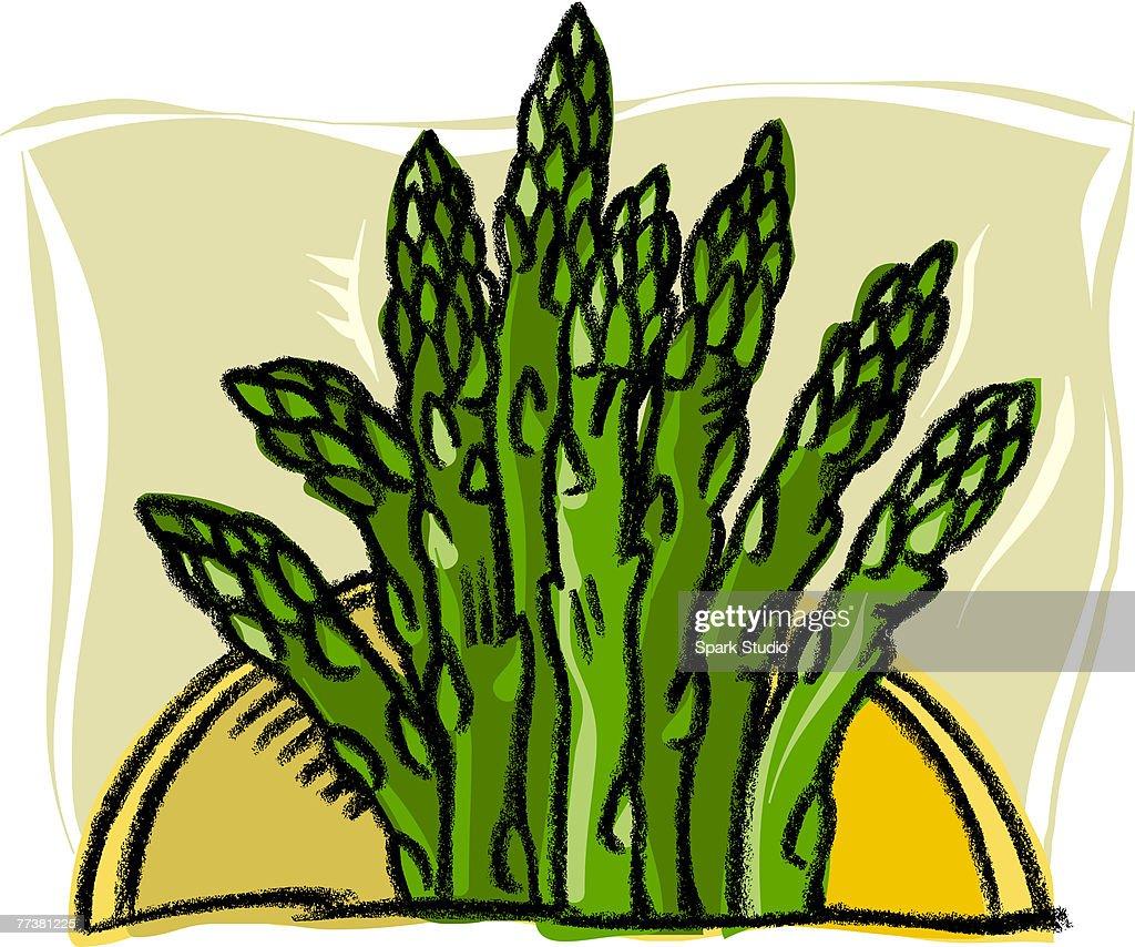 A bunch of asparagus : Illustration