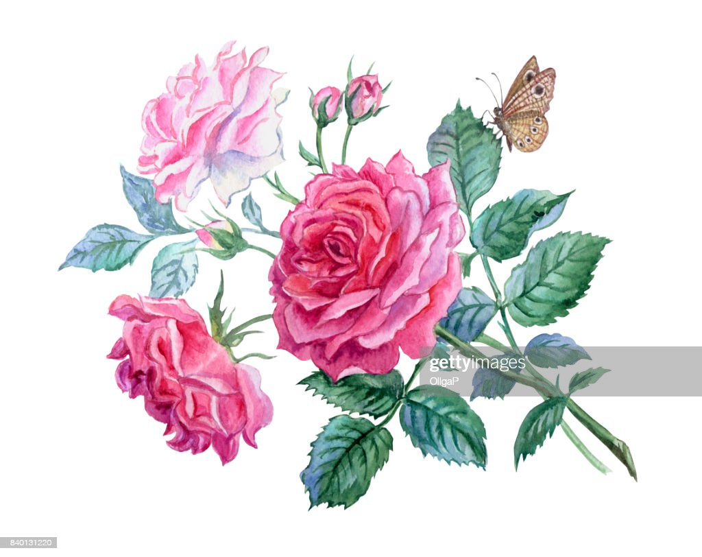 A Bunch Of Delicate Pink Roses And A Butterfly Stock Illustration
