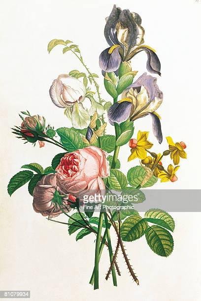 bunch of flowers - archival stock illustrations