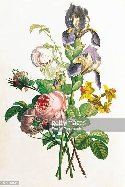 bunch of flowers - 1800~1809年点のイラスト素材/クリップアート素材/マンガ素材/アイコン素材