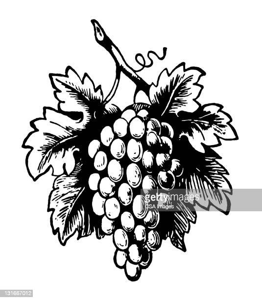 bunch of grapes - vine stock illustrations