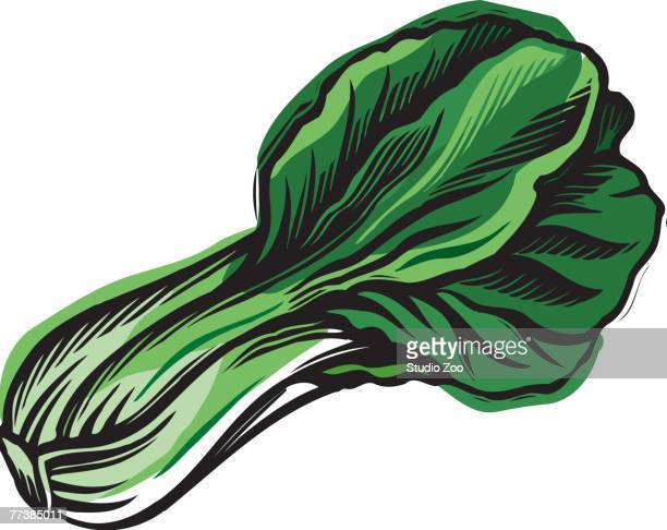 a bunch of green bok chouy - bok choy stock illustrations, clip art, cartoons, & icons