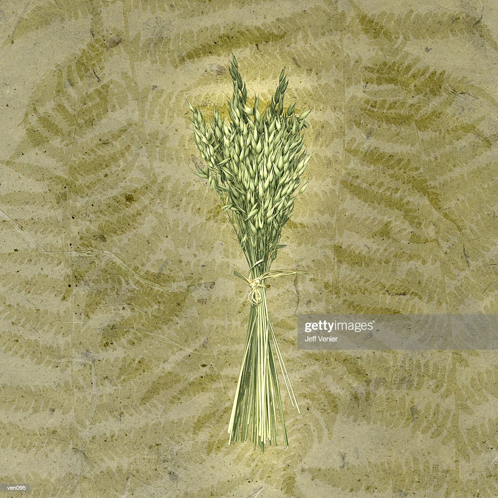 Bundle of Oats on Fern Background : Ilustración de stock