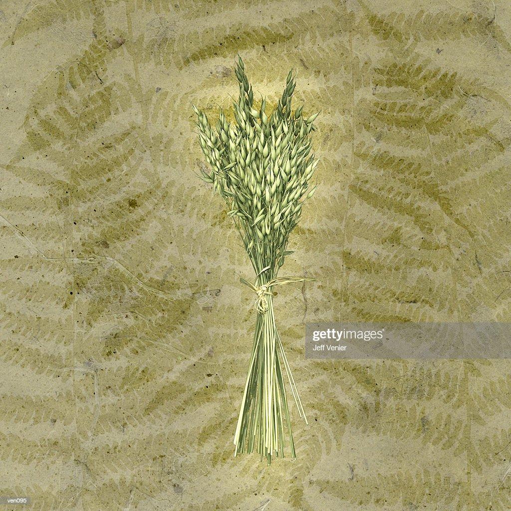 Bundle of Oats on Fern Background : Stock Illustration