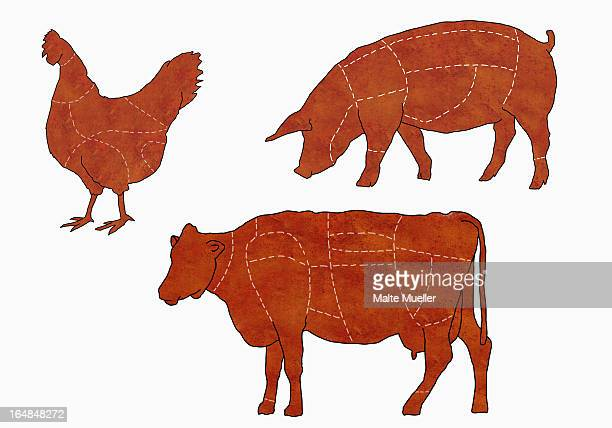 ilustraciones, imágenes clip art, dibujos animados e iconos de stock de a butcher's diagram of a cow, a chicken and a pig - vacas