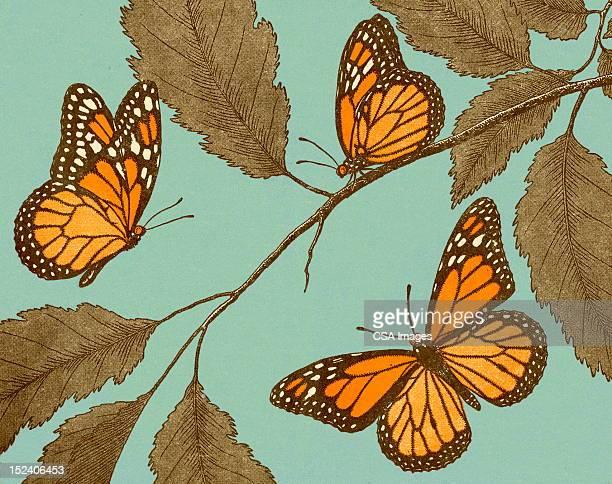 ilustraciones, imágenes clip art, dibujos animados e iconos de stock de mariposas y hojas - mariposa monarca