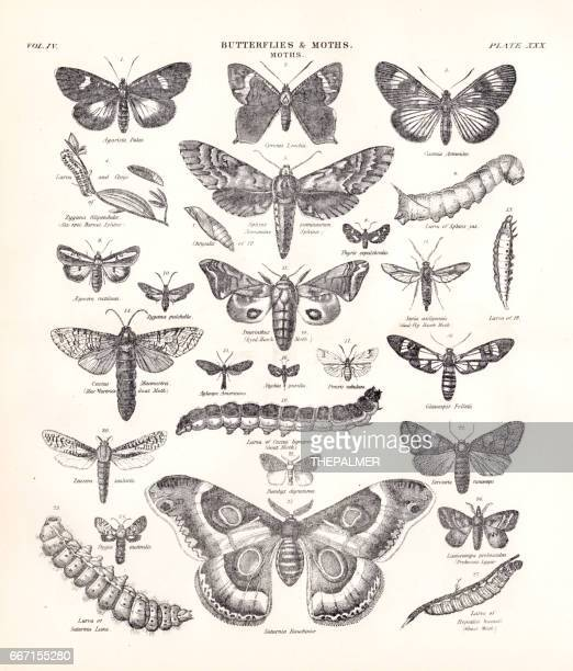 Butterflies and Moths engraving 1877