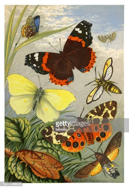 butterflies and moths - artistic product stock illustrations