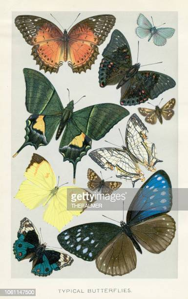 butterflies chromolithograph 1896 - lithograph stock illustrations