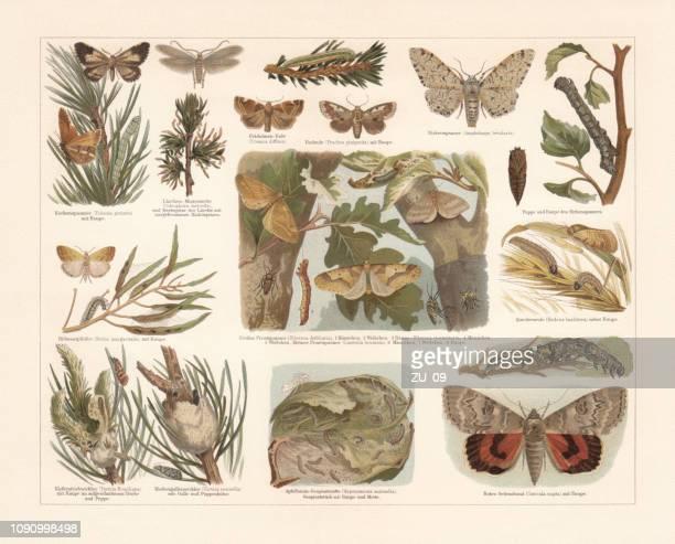 Mariposas, cromolitografía, publicadas en 1897