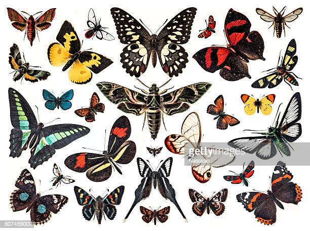 butterflies - insect stock illustrations