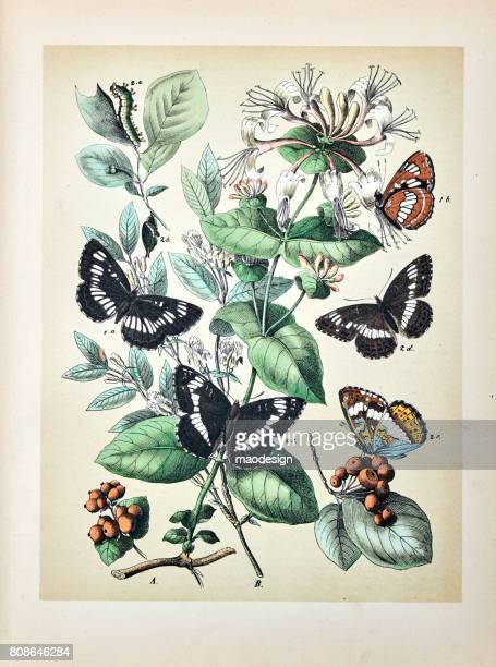 ilustrações, clipart, desenhos animados e ícones de borboletas, traças, insetos e plantas - ilustração 1889 - lepidóptero