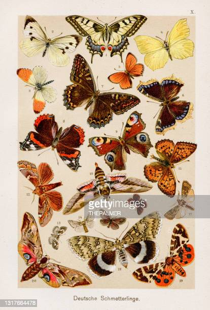 butterfly chromolithography 1899 - artistic product stock illustrations
