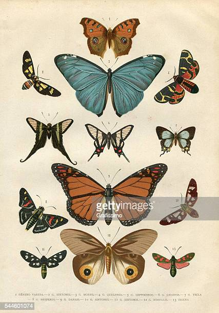butterfly hesperia illustration 1881 - 18th century stock illustrations