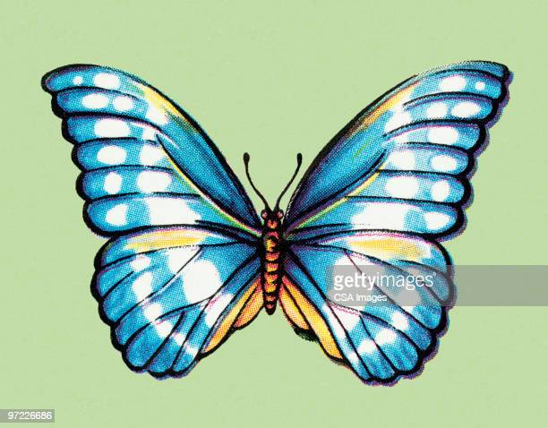 butterfly - animal wing stock illustrations