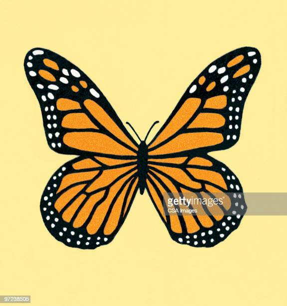 butterfly - beauty stock illustrations