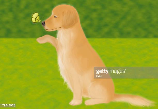 Butterfly perching on nose of Golden Retriever, side view, differential focus