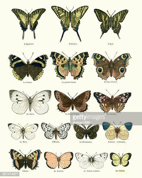 butterlies - lithograph stock illustrations