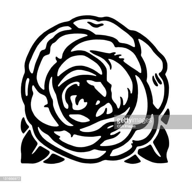 cabbage rose or peony - {{asset.href}} stock illustrations