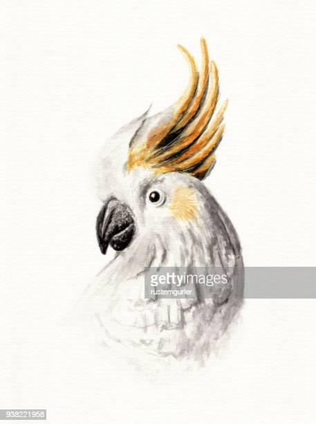 cacatua galerita watercolor painting - parrot stock illustrations, clip art, cartoons, & icons