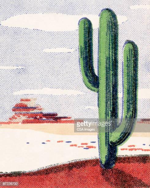ilustrações, clipart, desenhos animados e ícones de cacti in the desert - cacto