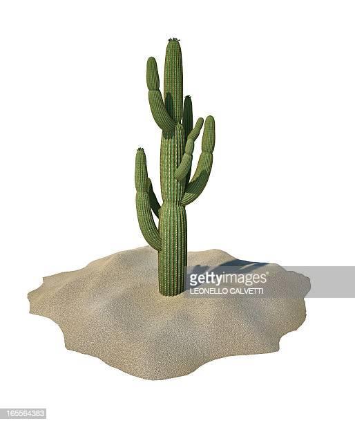 cactus, artwork - 乾燥気候点のイラスト素材/クリップアート素材/マンガ素材/アイコン素材