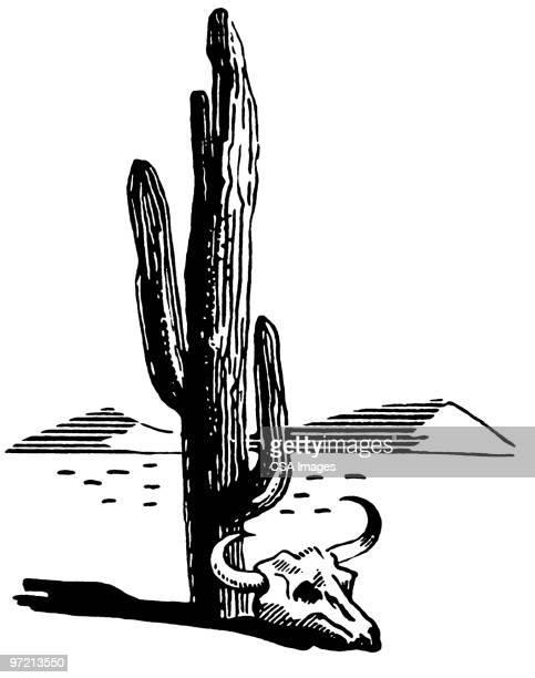 ilustraciones, imágenes clip art, dibujos animados e iconos de stock de cactus - cactus